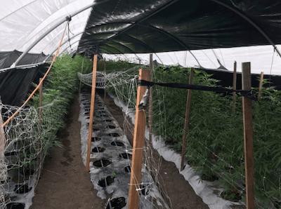 CA: Santa Barbara Raids of Illegal Grows Net 20 Tons Last Week