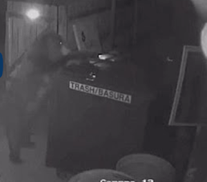 Bear steals bin from Colorado marijuana dispensary