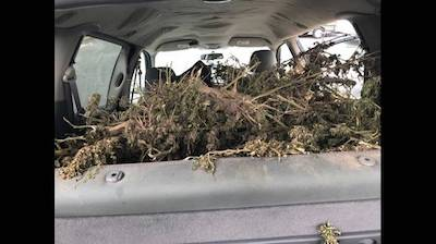 Quite Possibly The Worst Ever Attempt To Hide Cannabis In A Vehicle