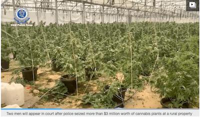 Australia: Police seize $3 million worth of cannabis plants near Coffs Harbour