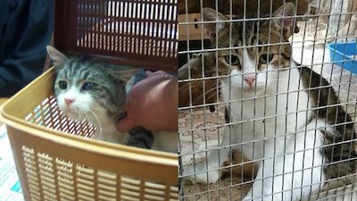 Russia: Fugitive Russian Drug-Smuggling Cat Gets a Body Double in Court, But Is It The Same Kitty?