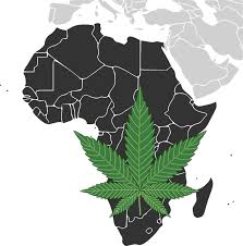 Article: African countries are cashing in on cannabis