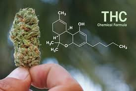 What Happens To All That THC Extracted When Making CBD ?