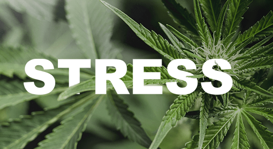 Stressing Your Plants Gets You More THC