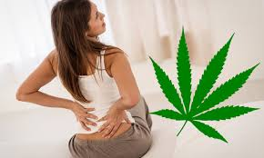 More Than 90% Of Legal Marijuana Products 'Too Strong' For Pain Relief, Study Finds