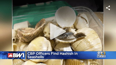 Baltimore CBP Seizes Hashish Concealed Inside Seashells From Nigeria