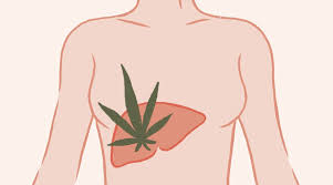 IS CBD TOXIC TO THE LIVER?