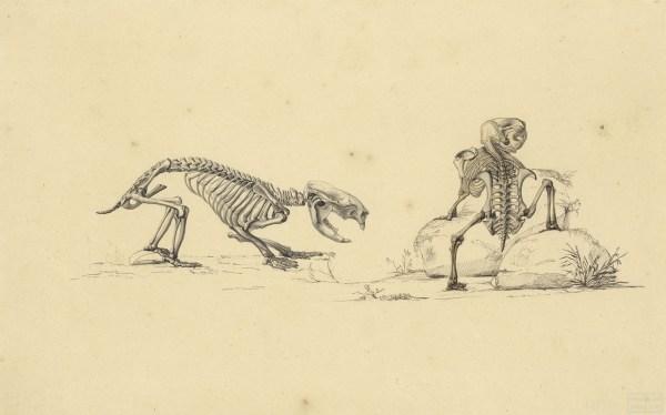 Art of Science wombats no. 1