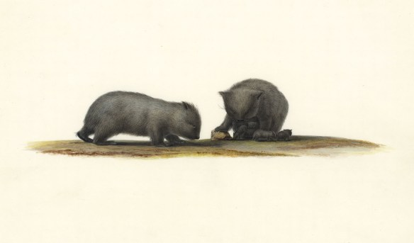 Art of Science wombats no. 3