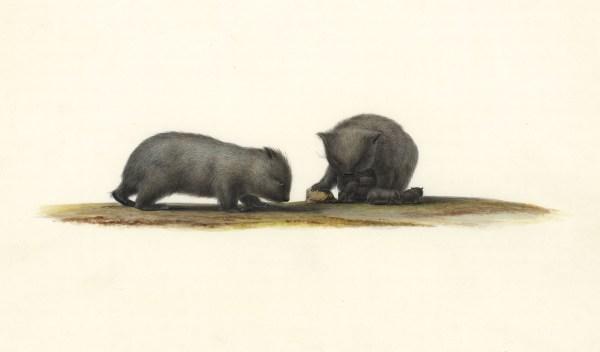 Art of Science wombats no. 3