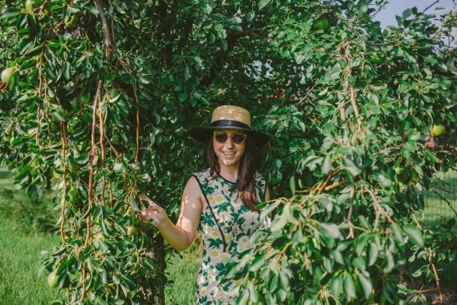 Pear Picking - Waketon Road Blog-3