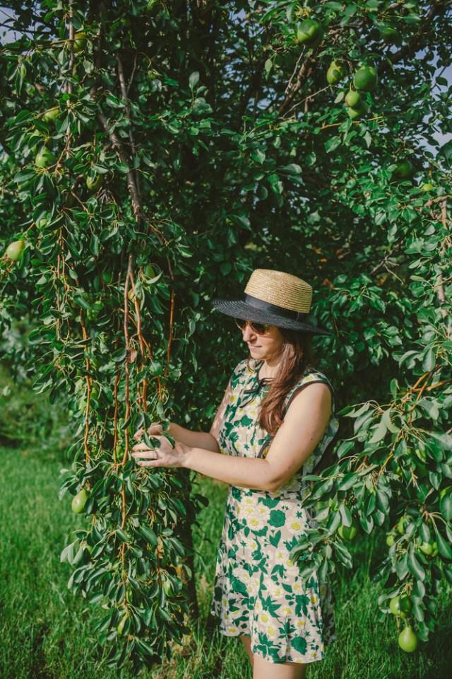 Pear Picking - Waketon Road Blog-4