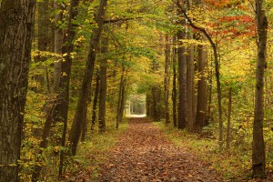Flickr-forest trail-Nicholas_T