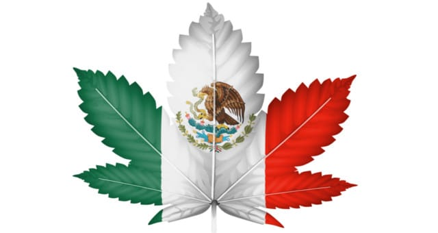 Mexico Cannabis-1