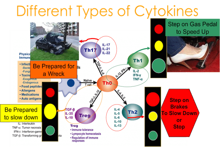 cytokine-pathway-1024x650