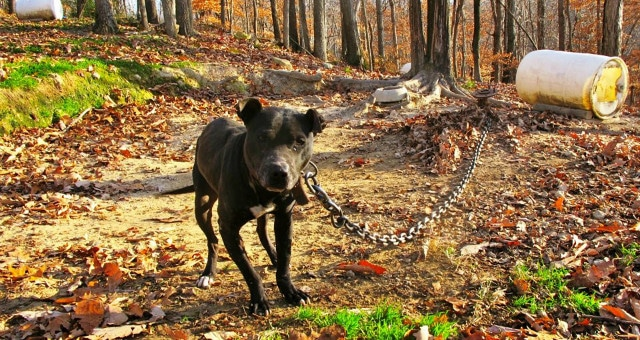 Why the FBI Now Categorizes Animal Cruelty as a Class A Felony