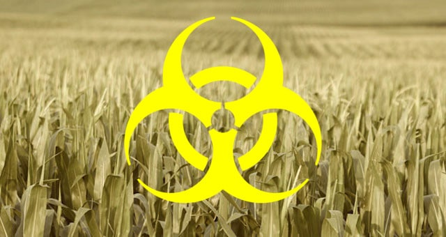 Corn Fields Crops Agriculture Monsanto Biohazard