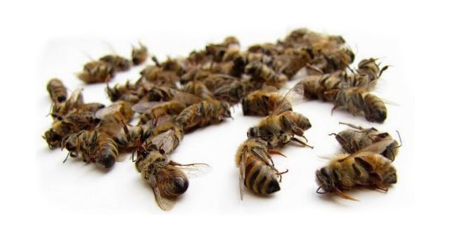 Dead Bees-1