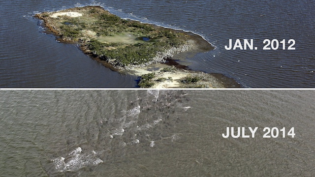 Cat Island Before After