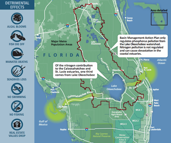 Florida's Largest Lake is Now a Toxic Wasteland, a Victim of Politics as Usual Everglades