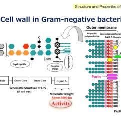 Bacteria Structure Diagram 2000 Dodge Neon Radio Wiring What Is Bacterial Endotoxin Wako Lal System Figure 1 Lipopolysaccharide Schematic