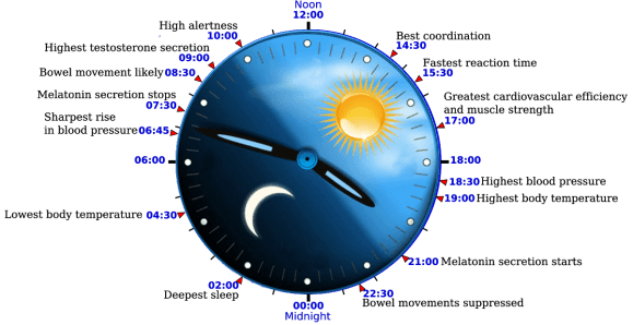 Image result for circadian rhythm