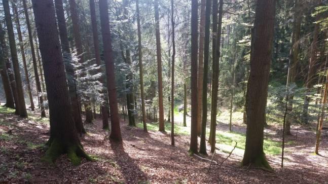 Kobernaußerwald