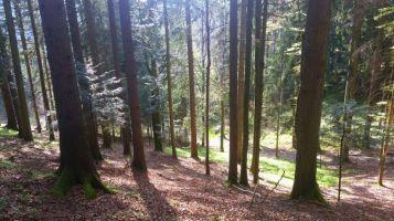 #Kobernaußerwald #Schlag #WaldKobel