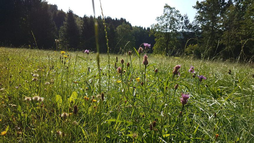 Umgebung um den Wald Kobel