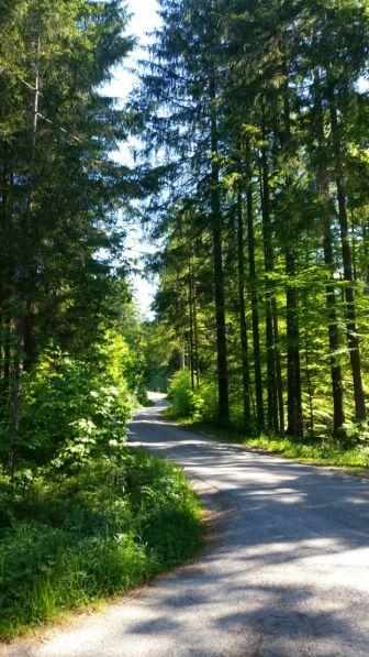 Waldweg zum Wald Kobel