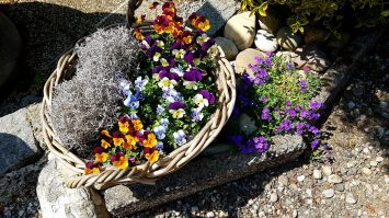 Blumen am Wald Kobel