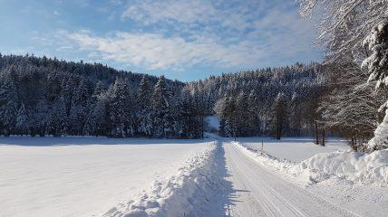 Jackleck Schlag Wald Kobel bei Schnee