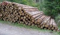 Holzpreise und Holzpreisentwicklung Fichte   Wald-Prinz.de