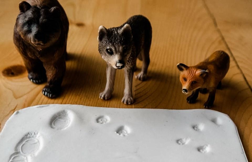 Tierspuren raten für Zuhausef