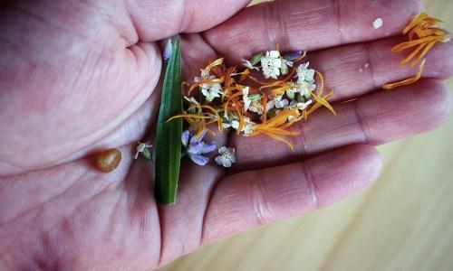 Aua-Salbe mit Lavendel, Spitzwegerich, Schafgarbe, Ringelblume und Fichtenharz