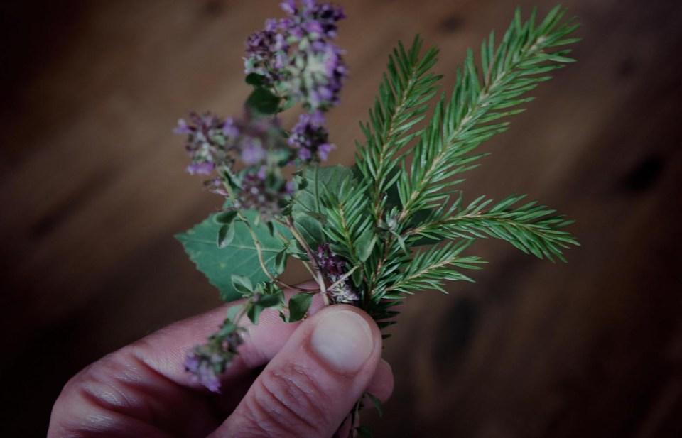 Waldsalz: Fichte, Giersch und Thymian