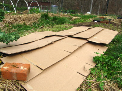weeds covered by cardboard