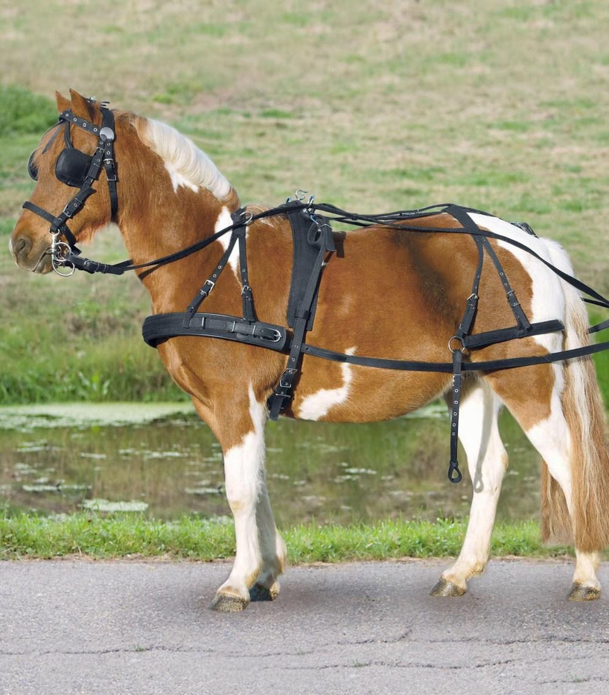 medium resolution of pony harnes