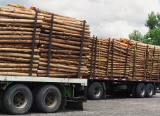 Maeinheiten fr Holz