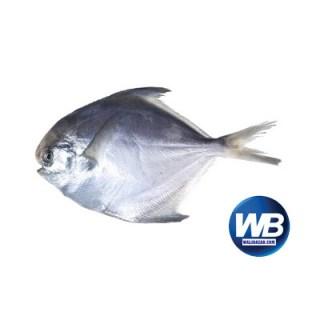 Rupchanda Fish