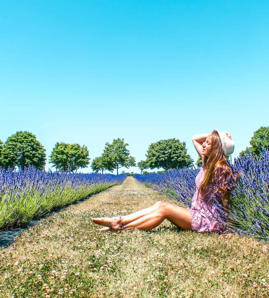 Lavender fields in Ontario and where to find them in Norfolk