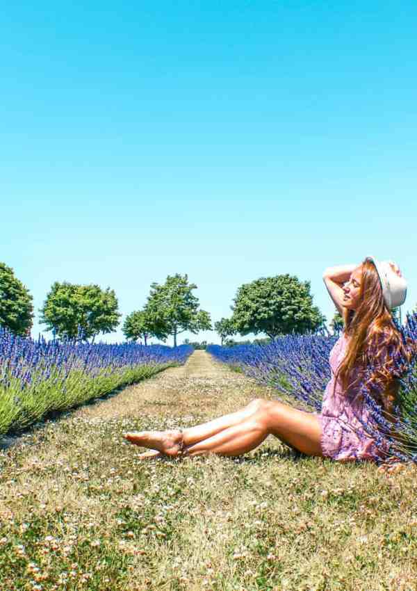 Lavender fields in Ontario and where to find them in Norfolk County