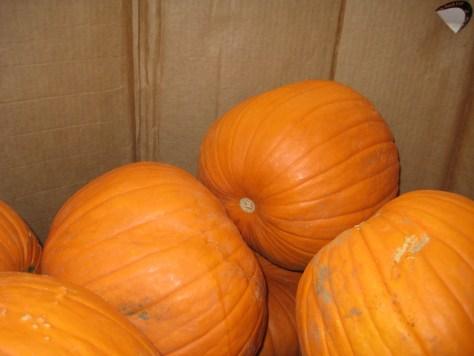 Pumpkin spice 009
