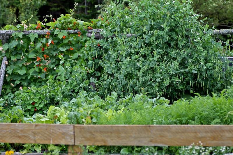 Trellises in the potager garden