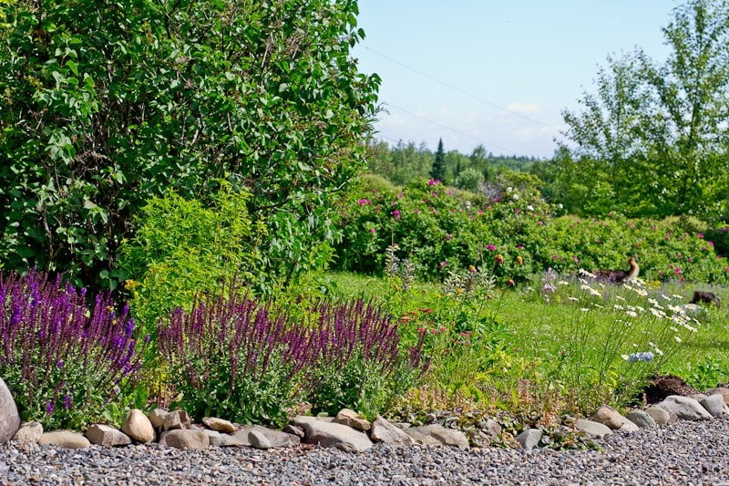 This pollinator friendly garden helps us keep the proerty and the vegetable garden healthy.