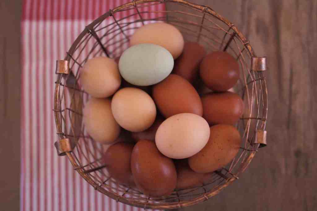 Farm fresh eggs from heritage hens