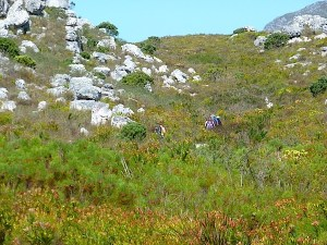 blog in the fynbos