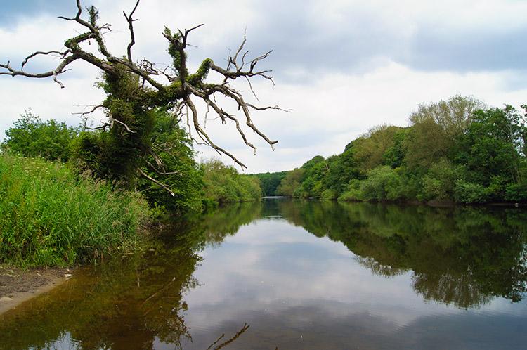 River Ure near Masham
