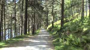 Short Walk at Glendalough, The Miners Road
