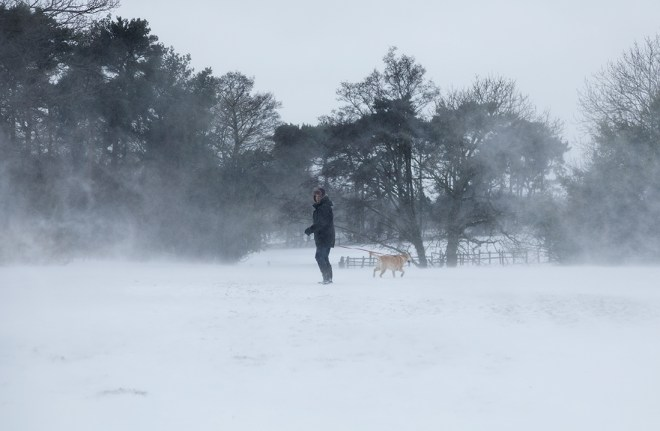 Dog walker during Beast from the East Storm